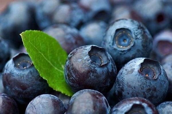 番茄树种子_和蓝莓相似的野果有哪些 你吃过哪几种_今日农资